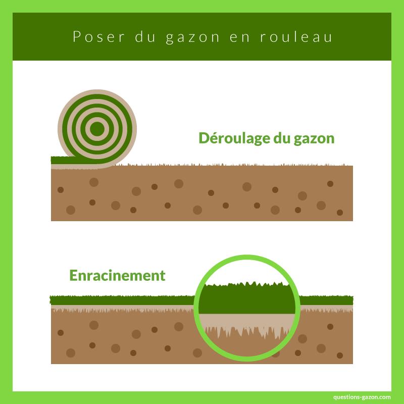 Infographie gazon en rouleau