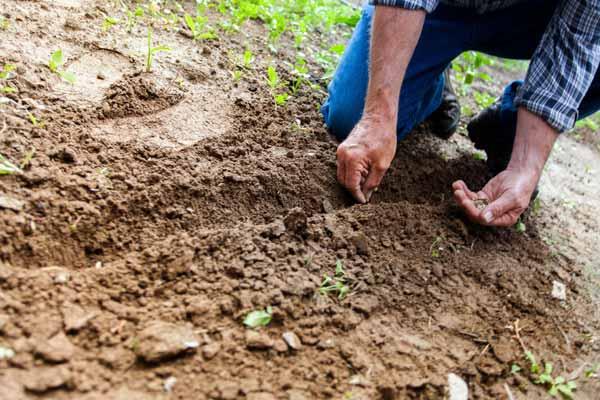 Composition du sol et de la terre